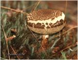 Fungi32