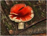 Fungi39