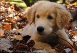 This is Sammy ...