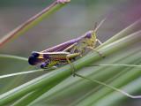 Crickets & Grashoppers