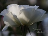 Margaret Merril