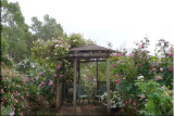 Rose garden on cool morning 09.26.jpg