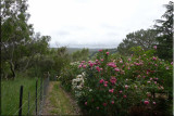 Rose garden on cool morning 09.45.jpg