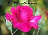 New William Shakespeare