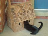 Blackie exploring