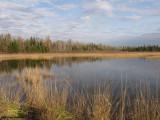 Marlborough forest - Roger's Pond