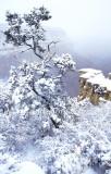 Grand Canyon Winter Whiteout