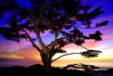 Carmel Cypress Sunset