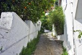 Small lane and an orange tree