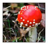 8 October - Fungi Fun!