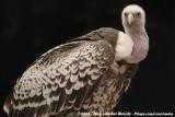 June 7, 2008: Vogelpark Avifauna (NL)