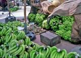 Bananas for Market