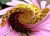 Twirled Butterfly on Cone Flower