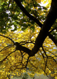 Unusual Yellow Tree Branch