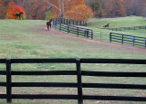Horses and Fences One