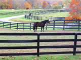 Horse and Fence Two