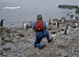 Adelie Penquins in Antarctica