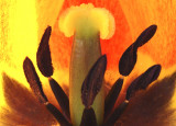 Real Tulip Detail
