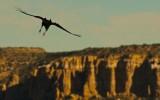 Soaring Raven, Acoma Pueblo