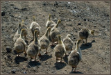Where is mother goose ?