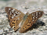 Unknown butterfly_1