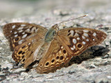 Unknown butterfly_4