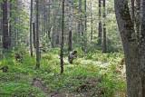 Wood  close toTeplie Ozera west of Vydrino