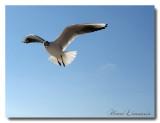 Oiseaux Marins
