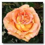 Objectif Fleurs - Flowers