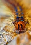 The Butterfly in Spe