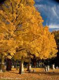 Historic Springfield, Mass., Cemetery
