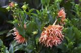 Flower at the Biltmore