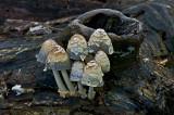 Mushrooms at Leesylvania State Park