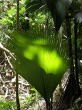 PRASLIN - The east and Vallee de Mai