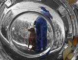 Pawsing & Reflecting on a Dog Walk