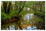 Spring Morning Along Pine Run Creek