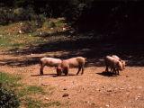 Sardinia, Italy (Apr - May 1999)
