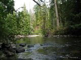 Little Qualicum River 3.jpg