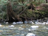 Little Qualicum River shoreline.jpg