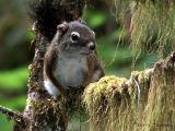 Red Squirrel A1.jpg