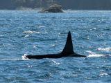 Orca 4.jpg