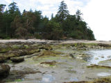 Whaling Station rocky shore 1.jpg