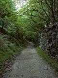 Walk along River Teign near Fingle Bridge.jpg