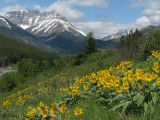 Waterton Lakes N.P. and Balsam Root 1.JPG