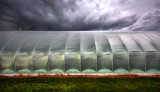 greenhouse side