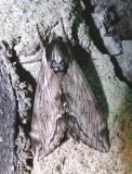 moth-150708-6.jpg