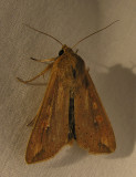 moth-july4.jpg