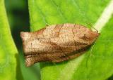 moth-june30.jpg