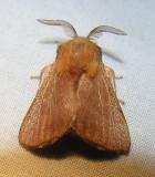 moth-july6.jpg