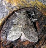 moth-04-08-2008-2.jpg
